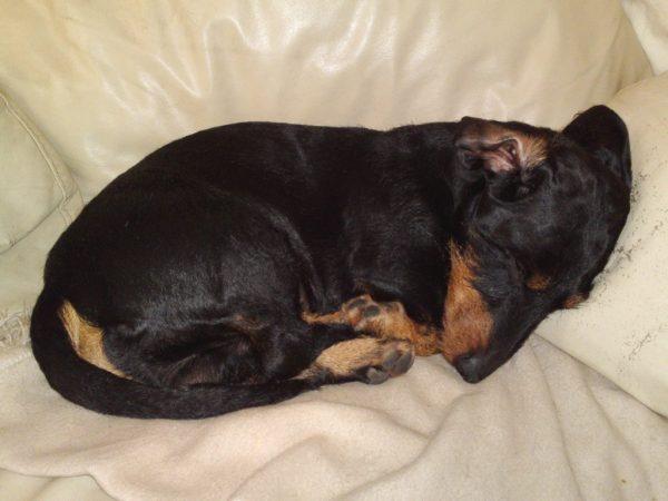 Lieblingsstellung: Schlafen, bei Papa auf der Couch