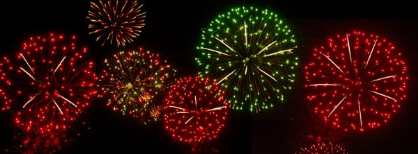 Feuerwerksblüten