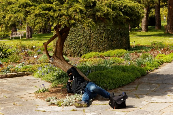 Ein Fotograf, im Blumenbeet unterm Baum liegend und senkrecht nach oben fotografierend