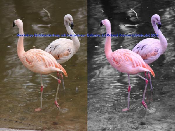 Umwandlung in schwarzweiß, nur die Flamingos bleiben farbig