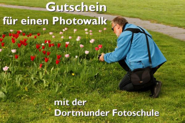 Gutschein für einen Photowalk, Muster, Mann mit Kamera kniet vor Tulpen auf einer Wiese