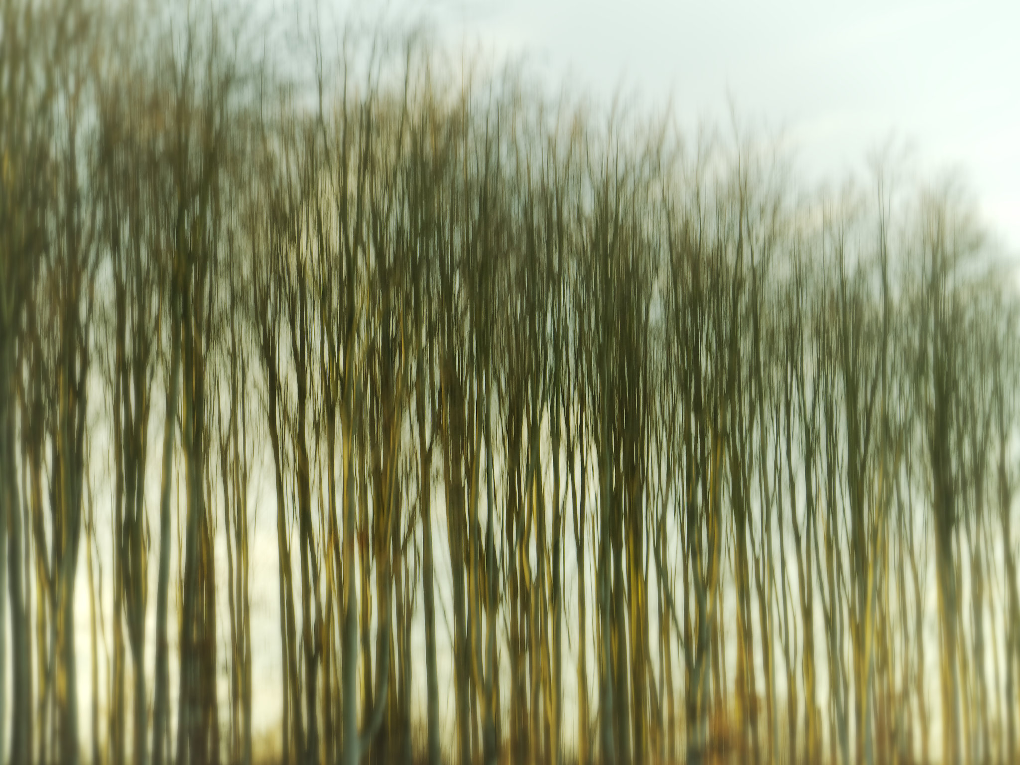 Aufnahme von kahlen Bäumen, bei der die Kamera abwärts bewegt wurde. Dadurch ergibt sich eine Verschiebung in Längsrichtung, also in Wuchsrichtung der Bäume.