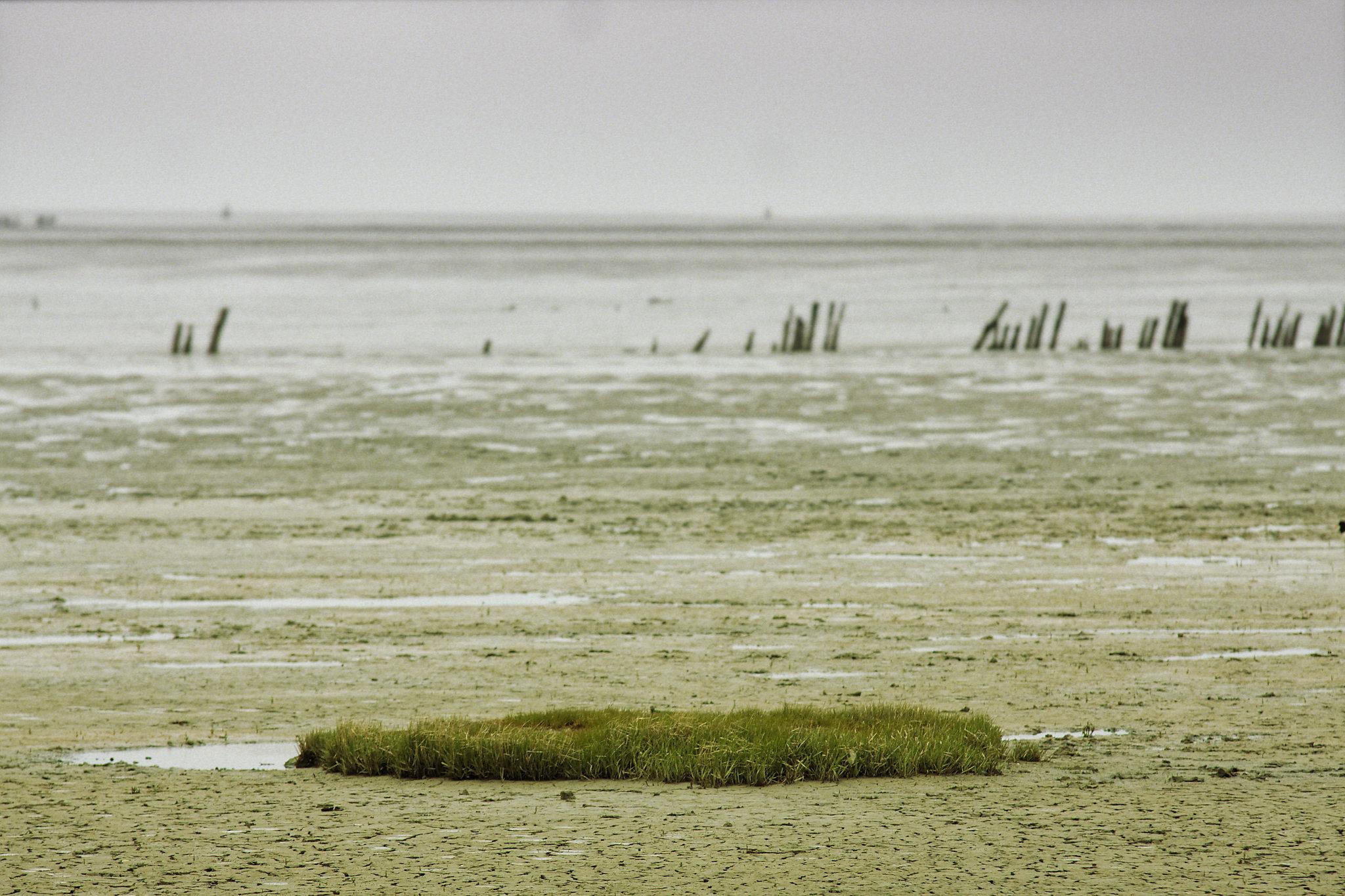 Urlaub in Friesland. Ein Blick ins friesische Watt. Im Vordergrund ist eine kleine Grasinsel zu sehen. Dahinter geht der Blick über fast zerstörte hölzerne Bunen in die graue Weite.