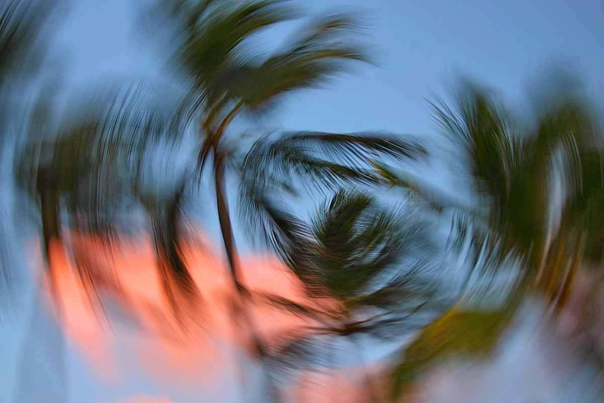 Aufnahme von Palmen, während die Kamera gedreht wurde. Die Palmwedel bilden verschwommene Kreise um einen scharfen Mittelpunkt